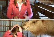 خورده شدن موهای خبرنگار توسط شتر در هنگام پخش زنده