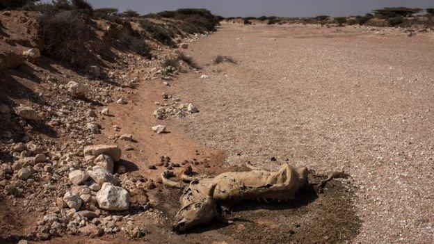 مرگ 100 نفر به علت گرسنگی در کشور سومالی