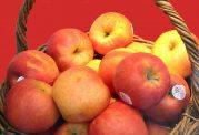 برچسبهای روی میوه برای چیست؟
