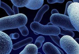 افزایش خطر سقط جنین با باکتری های غذا