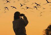 تماشای منظره پرندگان