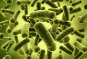 چند خوراکی که پروبیوتیک دارند