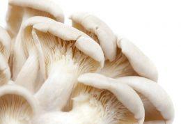 مواردی از قارچ صدفی که احتمالا نمیدانید
