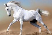 آشنایی با خصوصیات اسب و رفتارهای آن