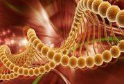 رژیم غذایی، فاکتوری خطرزای در بروز سرطان