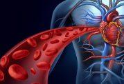 سرعت گردش خون به چه عواملی بستگی دارد