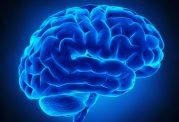 سه بریتانیایی برنده جایزه یک میلیون یورویی پژوهش مغز شدند