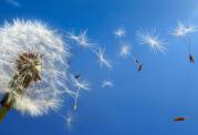 علائم و نشانه های بیماری کرون در فصل بهار