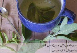 7 گیاه که با سرماخوردگی مبارزه می کنند