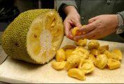 دانه های میوه جک فروت، می تواند جایگزین کاکائو باشد!