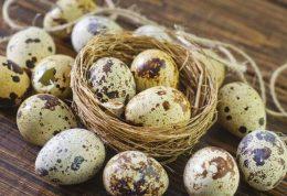 فواید مصرف تخم بلدرچین برای سلامتی کودکان