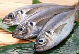 روش صحیح پاک کردن ماهی و میگو چیست؟