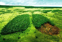 درونی کردن توجه به محیط زیست در کودک خود