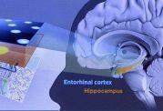 تاثیر مخرب GPS بر روی مغز انسان