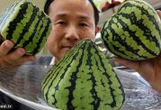 میوههای لوکس چند صد میلیونی در ژاپن