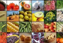 پروتئین گیاهی با صرفه تر است یا پروتئین حیوانی؟