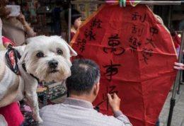 خوردن گوشت سگ و گربه در تایوان ممنوع شد