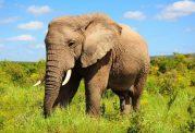 هوش باورنکردنی فیل ها