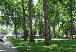 فضاهای سبز سلامت روان افراد مسن را تقویت میکند