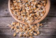 با جوانه گندم، از گرفتگی در سرخرگ ها جلوگیری کنید