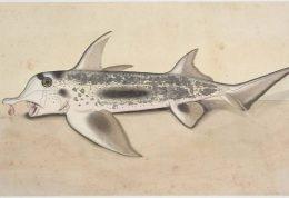 آیا ماهی یکی از اجداد ما انسان هاست!