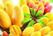 علل ضروری مصرف انبه برای حفظ سلامت بانوان