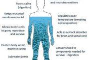 خطرات کم نوشیدن آب برای بدن