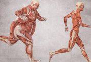 نوعی پروتئین تاثیرگذار در ایجاد سرطان پروستات