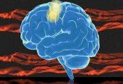 کمک به تولید فروکتوز توسط مغز انسان