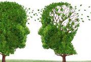 مواد غذایی مفید برای پیشگیری از آلزایمر