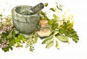 درباره گیاهان دارویی بیشتر بدانید