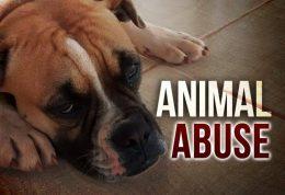 آزار حیوانات و بررسی علل روانی آن