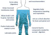 نقش مهم آب برای سلامتی بدن
