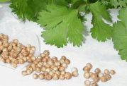 درمان مشکلات گوارشی با گیاه گشنیز