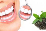با چای سبز دندان هایی سالم داشته باشید