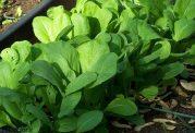 راهکاری طلایی برای پرورش گیاهان و سبزیجات در آپارتمان