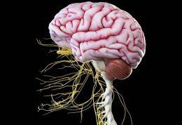 مصرف این مواد غذایی سبب جلوگیری از ابتلا به آلزایمر می شود