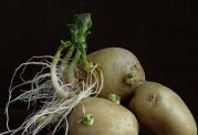 از خوردن ساقه و ریشه این گیاهان خودداری کنید