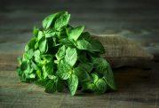 با گیاهان دارویی که از تنگی نفس جلوگیری می کنند آشنا شوید
