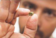 ابتلا به سرطان کف دهان با ماده مخدر جویدنی