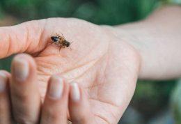 اقدامات ضروری پس از گزش با زنبور