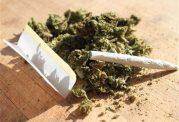 ماده مخدر بنگ و عوارض مصرف آن