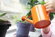 راه و روش صحیح مراقبت از گیاهان آپارتمانی