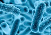 بیماری های واگیردار شایع را بشناسیم