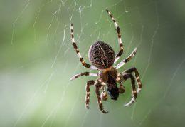 راه های طبیعی برای جلوگیری از ورود عنکبوت ها به خانه
