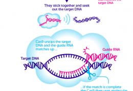 ویرایش ژن کریسپر و مقابله با سقط جنین و بیماری های ژنتیکی