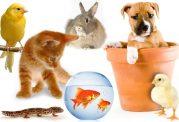 بهترین حیوان برای نگهداری در آپارتمان کدام است؟