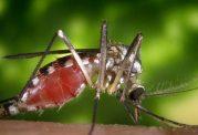 سوپر مالاریا در جهان شیوع می یابد