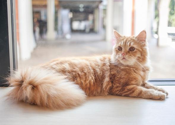 اصول و نکات مربوط به نگهداری از گربه خانگی
