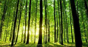 فواید زندگی کردن در جنگل برای مغز